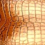 Krokodýlí kůže
